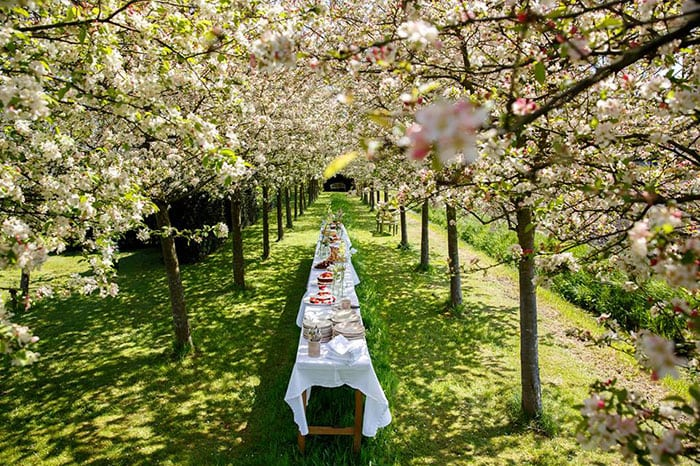 wedding table in the middle of a garden shadowed by blossom trees