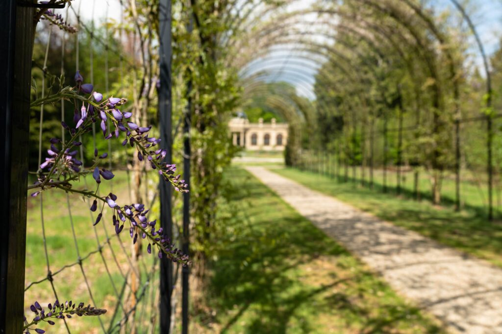 eloping wedding ideas beautiful archway leading to a orangerie park